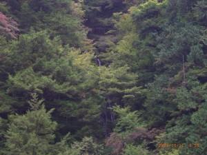 2008_10_11_narakoko 020