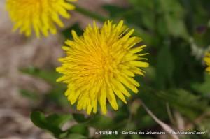 2010_05_04_hakuba-toyama 134