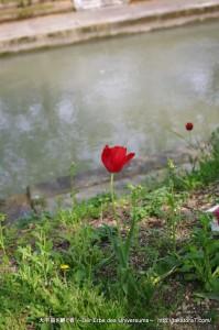2010_05_04_hakuba-toyama 193