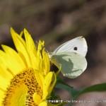 2010_08_15-23_hokkaido 224