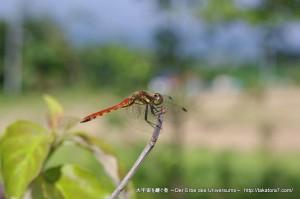 2010_08_15-23_hokkaido 228