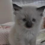 2011_07_18_cat-2 -mod