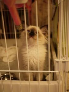 2011_07_18_cat-13