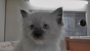 2011_07_18_cat-3 -mod