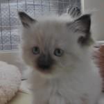 2011_07_18_cat-4 -mod