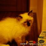 2011_07_20_cat-1