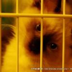 2011_07_22_cat