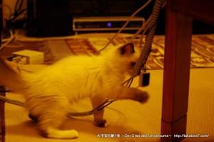 2011_07_21_cat-5