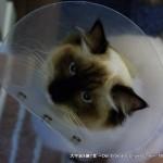 2012_01_09_cat-001