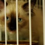 2011_07_22_cat-3