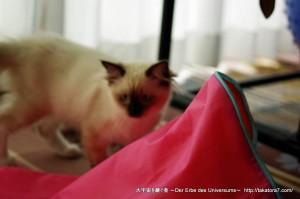 2011_07_30_cat-1