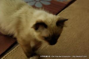 2011_07_30_cat