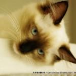 2011_09_03_cat-19