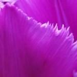 cropped-2012_04_22_flower-003.jpg