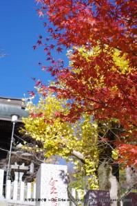 2012_11_25_tsukuba-034