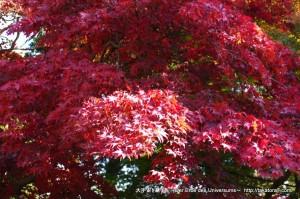 2012_11_25_tsukuba-055