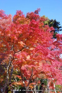2012_11_25_tsukuba-063