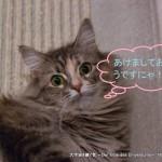 2013_01_01_cat-014