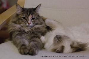 2013_01_03_cat-002