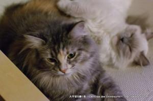 2013_01_03_cat-004