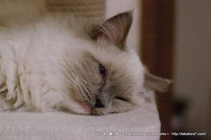 2013_01_04_cat-005