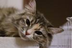 2013_01_04_cat-013