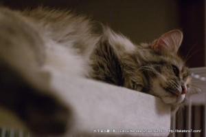 2013_01_04_cat-014