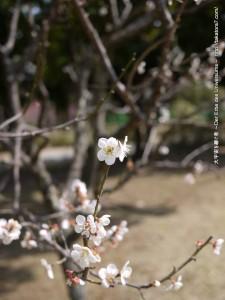 2013_03_17_flower-016