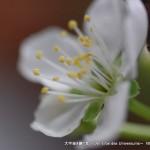 2013_03_20_flower-002