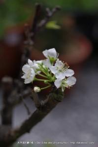 2013_03_20_flower