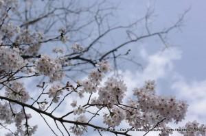 2013_03_23_flower-021