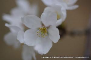 2013_03_23_flower-033