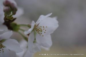 2013_03_23_flower-037