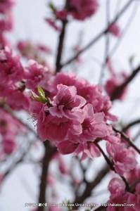 2013_03_23_flower-067