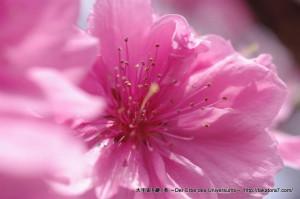 2013_03_23_flower-069