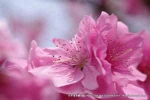 2013_03_23_flower-070