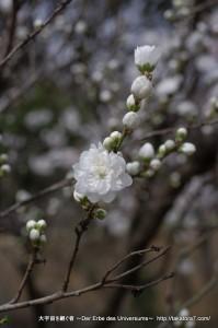 2013_03_23_flower-091