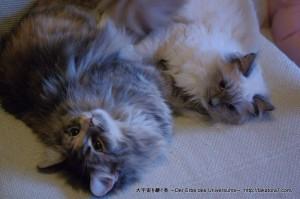 2013_02_02_cat-001