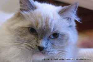2013_02_02_cat-007