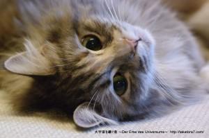 2013_02_02_cat-011