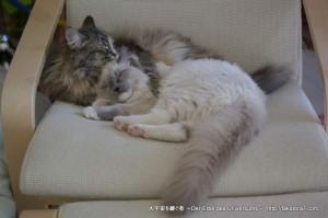 2013_02_16_cat