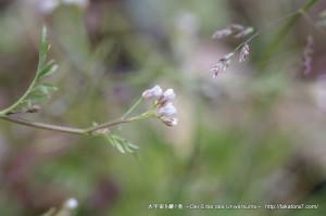 2013_03_03_flower-009