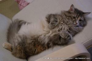 2013_03_09_cat-002