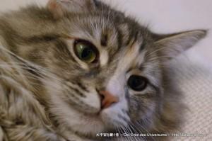 2013_03_09_cat-003