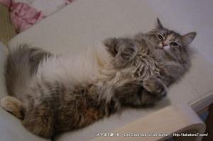 2013_03_09_cat-005