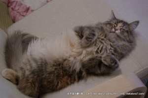 2013_03_09_cat-006
