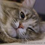 2013_03_09_cat-010
