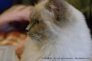 2013_03_09_cat-016