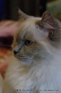 2013_03_09_cat-018