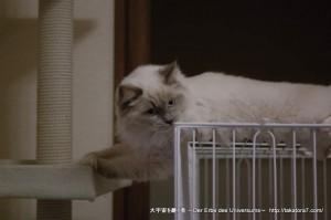 2013_03_13_cat-005